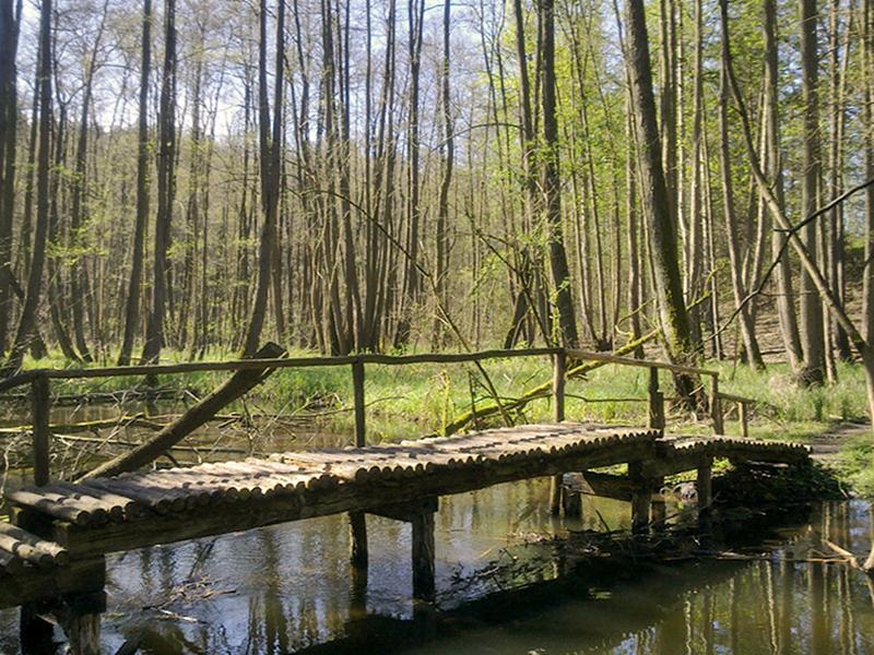 Knüppelbrücke über den Stobber