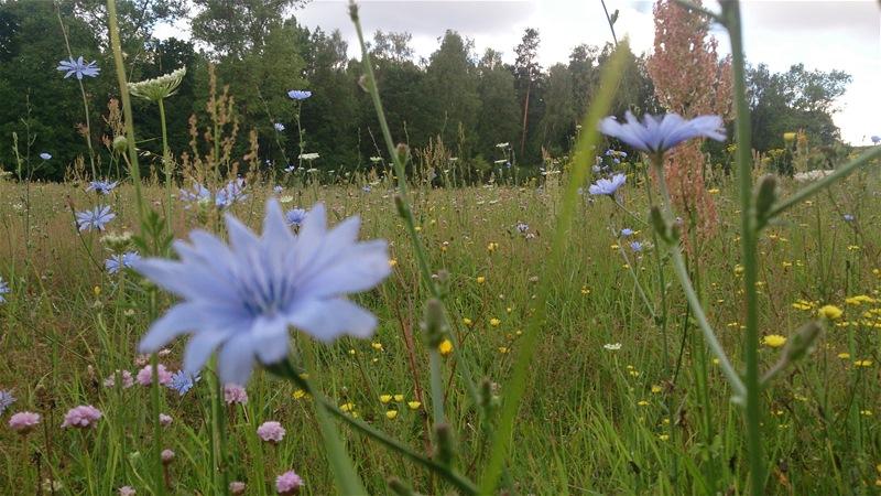 Blumenwiese, Blumenwiese, Blumenwiese ... ;-)