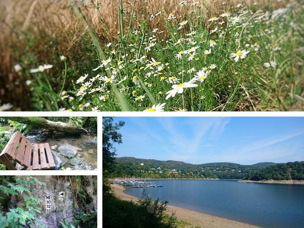 Wanderung am Wasser in der Eifel – perfekt für den Hochsommer